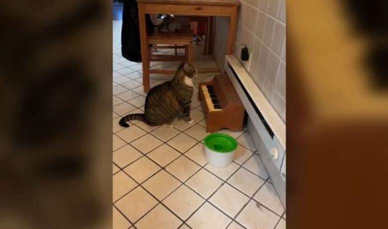 macska pénzt keres video a bináris opciók pontos mutatói 60 másodperc